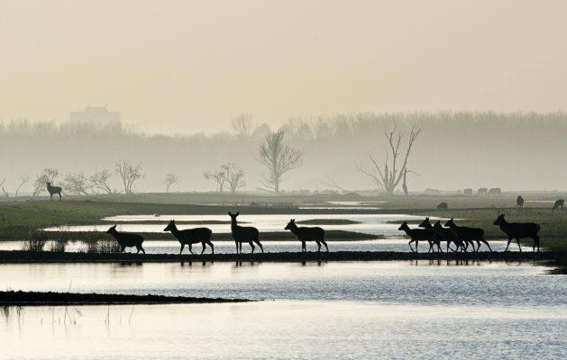 Rewilding- A Christian Perspective